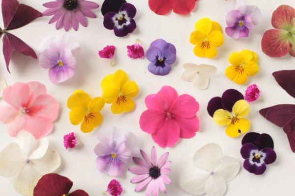 Paletas florales