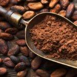 Cacao sustentable